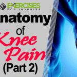 Anatomy of Knee Pain (Part 2)