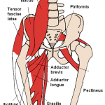 Why the Psoas Isn't the Devil
