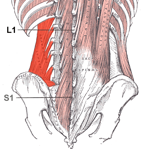 Quadratus Lumborum Muscle Strain