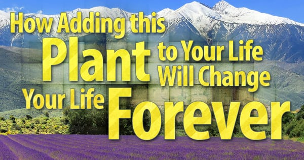 misc79 1 600x315 How Adding this Plant to Your Life Will Change Your Life Forever How Adding this Plant to Your Life Will Change Your Life Forever