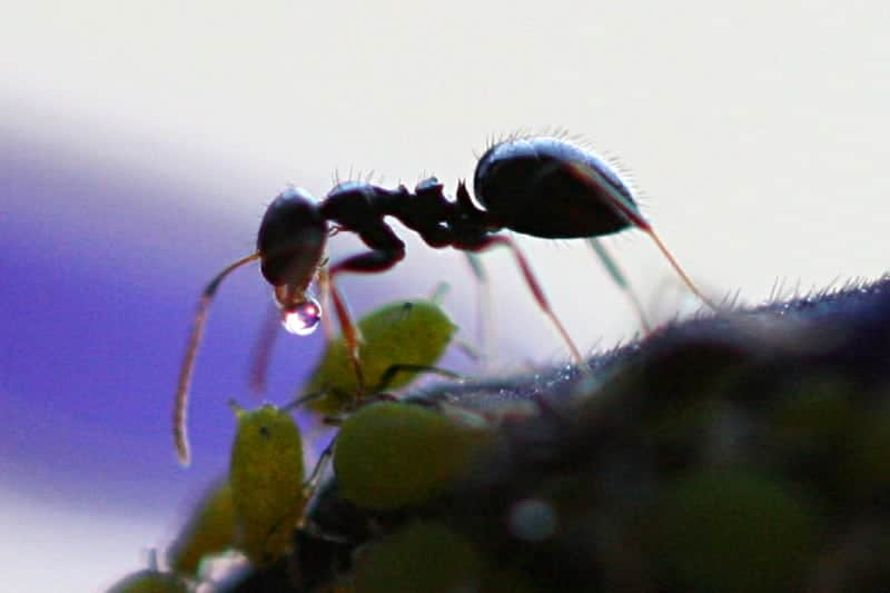 Black Ant 4 Herbs to Skyrocket Your Strength and Power