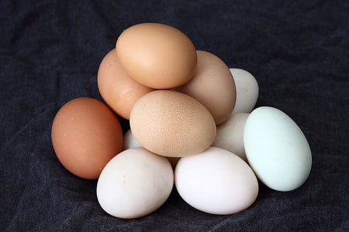 Eggs 6 Things to Look for When Buying Greens Powders