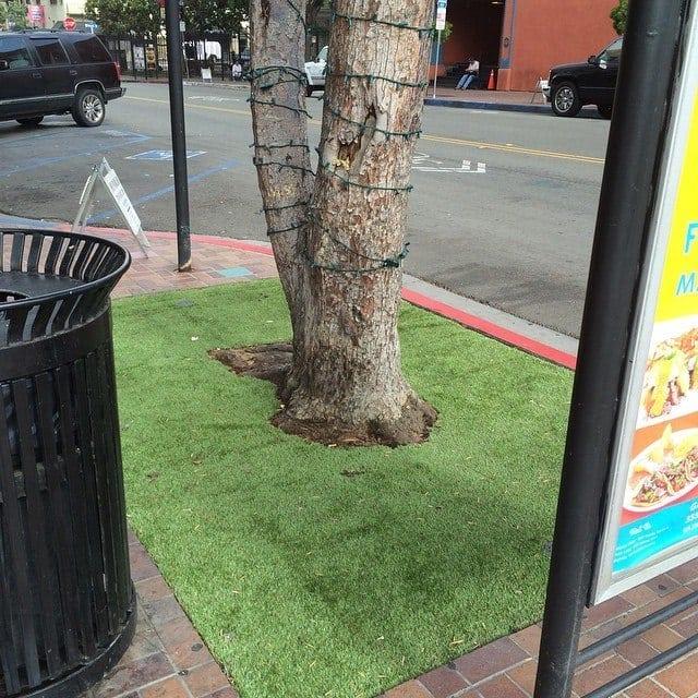 San Diego Grass