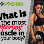 What is the most important muscle in your body?